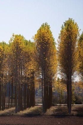 potatura alberi alto fusto mantova cremona parma verona